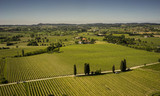 aerial view on vineyards