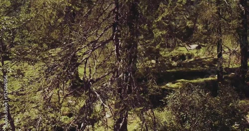 Foto op Canvas Natuur aerial flight over italian alps mountain pine woods. Wild green nature outdoor. above view 4k drone side view