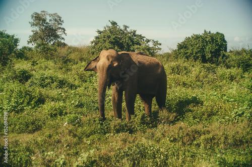 Poster Udewalewe National park Sri Lanka