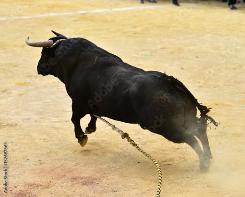 Staande foto Stierenvechten bull