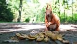 Eichhörnchen im Park - 152704750