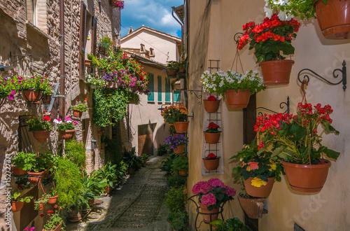 Romantico vicolo decorato con vasi di fiori nel centro storico di Spello