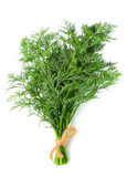 Bunch of dill isolated vertically. - 152727715