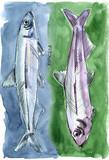 Candlefish - 152794396