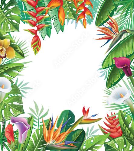 Tropikalne rośliny i kwiaty