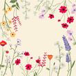 Variety of Wild Flowers Vector Illustration