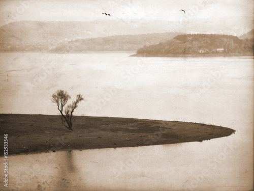 Lonely tree in aged textured art background. Depression and melancholy mood. Abstract loneliness and sadness. Flying birds on horizon - 152933546