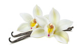 Double vanilla flower pods isolated on white - 152969106