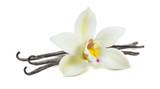 White vanilla flower pod isolated - 152969197