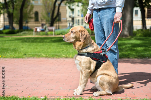 Poster Guide dog is helping a blind man