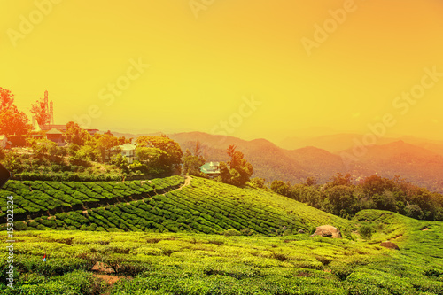Plexiglas Geel Tea plantations in Munnar, Kerala, India.