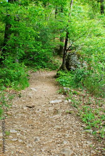 Foto op Canvas Weg in bos Sentier