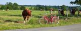 Vaches au pré et balade à vélo