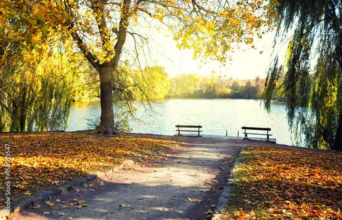 Plexiglas Zwavel geel Lake in the park with benches