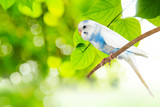 little budgie at tree branch