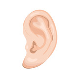 Human Ear Isolated On White