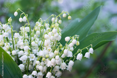 Fotobehang Lelietjes van dalen lily of the valley flowers