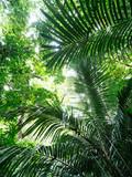 石垣島の森 - 153234765