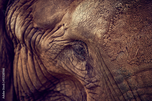 Eye of an elephant. African Elephant