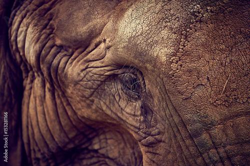 Eye of an elephant. African Elephant Poster