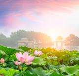 Beautiful lotus in Hangzhou West Lake,China