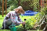 Sadzenie ziół na grządce. Kobieta sadzi rośliny w przydomowym ogródku - 153386922