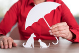 Concept of pets protection coverage