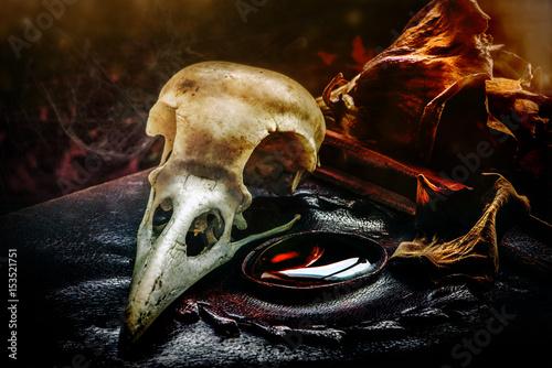 Plakát Dark mystic scene with a raven skull