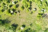 wiese mit bäume aus vogelperspektive