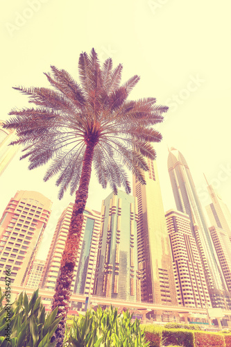 Papiers peints Dubai Palm tree in front of Dubai skyscrapers, color toning applied, United Arab Emirates.