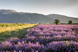 Lavender fields against mountains background