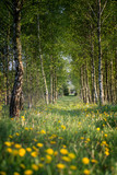 Footpath across the forest - 153607382