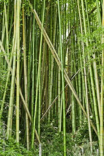 In de dag Bamboo Lush green bamboo