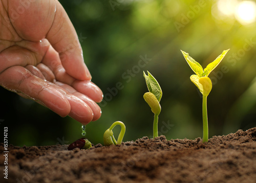 Male hand giving water to young plant with sunlight