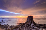 roots due to erosion and sky background beautiful dramatic sunset