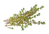 Sprig of thyme isolated on a white background - 153722328