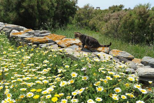 Chat chassant les lézards sur le site de Délos en Grèce