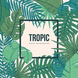 Tropic leaves background with frame for your text. Vintage texture.Eps10 vector. - 153819501