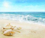 Sandy beach with shells and pearl. - 153826525