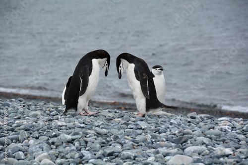 Plakát ペンギン