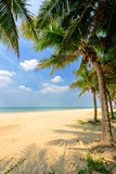 sunny tropical beach with coconut trees