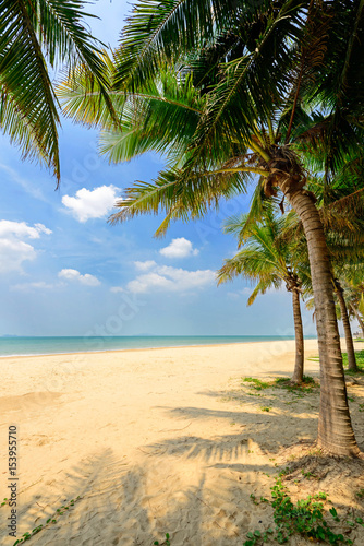 sunny tropical beach with coconut trees