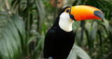 Toucan bird on the forest - 153964759
