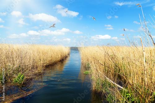 Leinwandbild Motiv - Gabriele Rohde : idyllisches Ufer der Schlei in Schleswig-Holstein