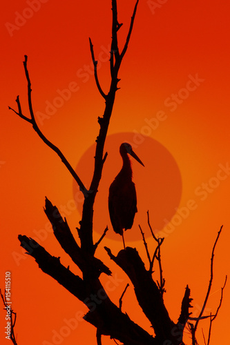 Perched on a stork tree in the setting sun 2