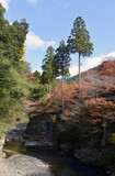 梅ヶ畑の秋