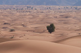 sand dunes in desert and mountains in background