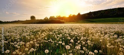 Blumenwiese Panorama - 154294960