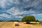 Harvest and tree