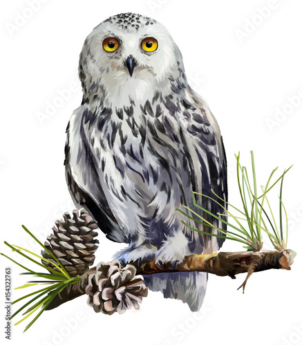 Foto op Aluminium Uilen cartoon Snowy owl sitting on a branch